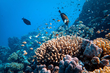 Maldives tunning coral reefs and sea creatures
