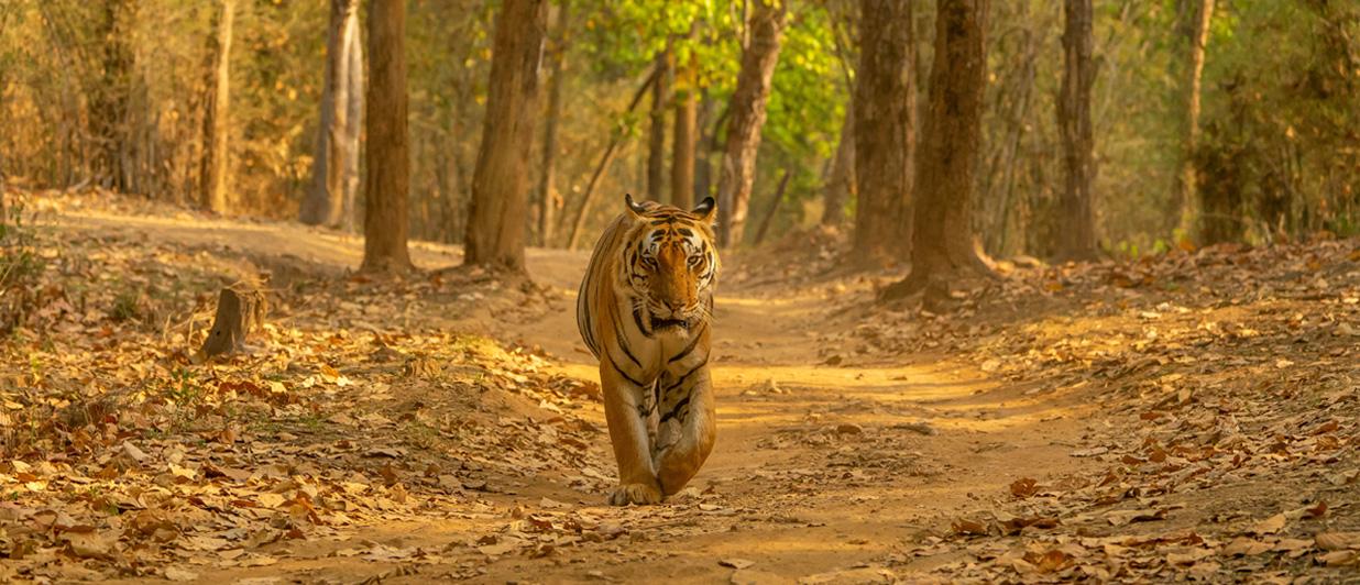 Meet India's celebrity cat