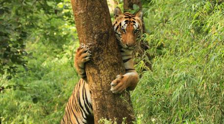 Satpura - Kanha National Park