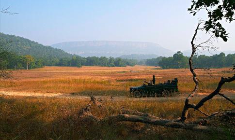 Kanha - Bandhavgarh National Park