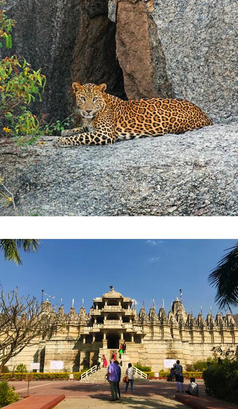 Jodhpur - Jawai (3 hrs drive)